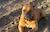 Раскрутка сайтов, привлечение посетителей - последнее сообщение от chechehin1961